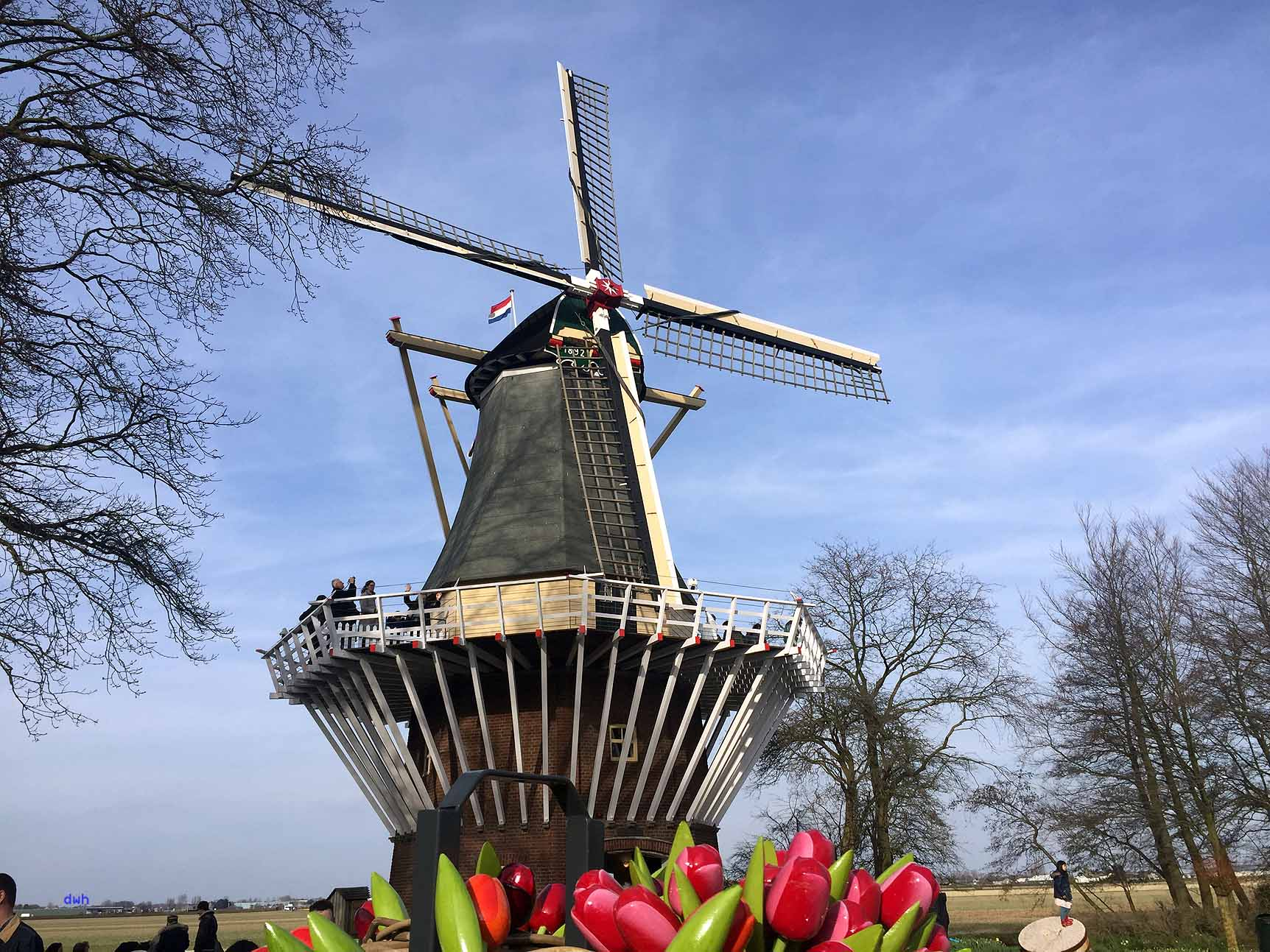 Inmitten blühender Blumen: die Holländermühle auf dem Keukenhof, Foto: D. Weirauch