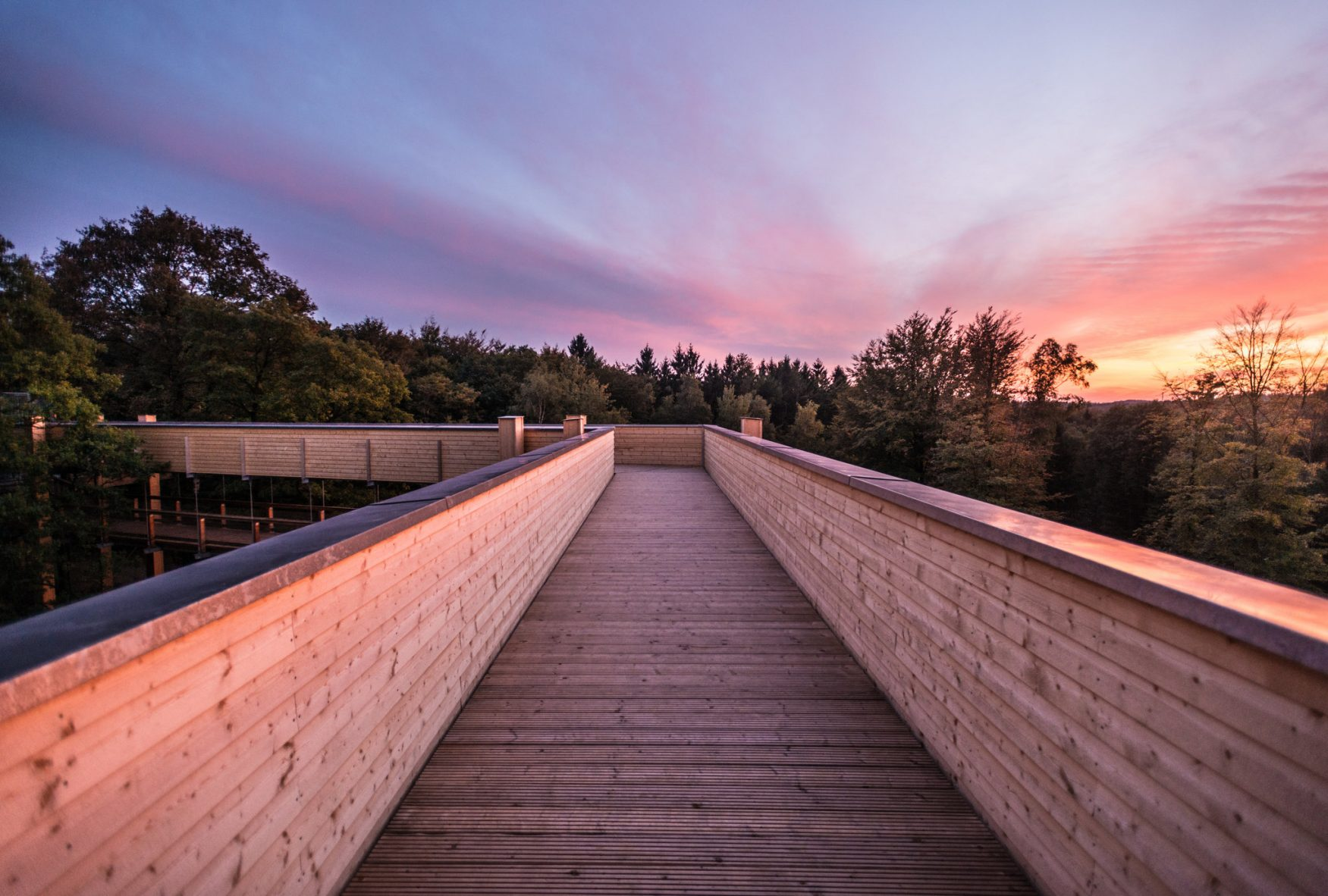 Blick auf panarbora Waldbroel Foto: Dominik Ketz