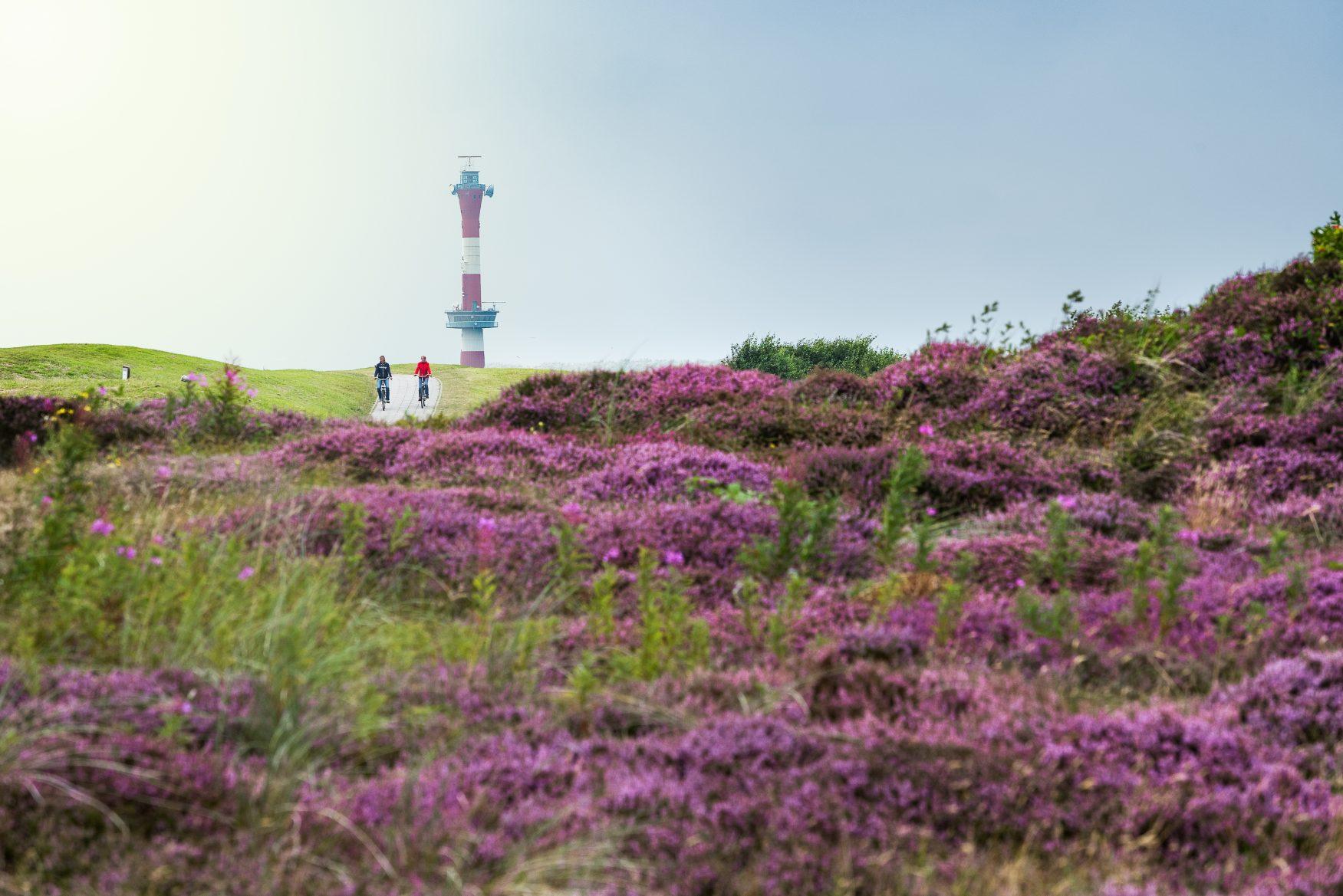 Heidefläche am Leuchtturm von Wangerooge, Sonnenaufgang am Inselstrand von Wangerooge Foto: Kurverwaltung Wangerooge ( Keesvan Surksum)