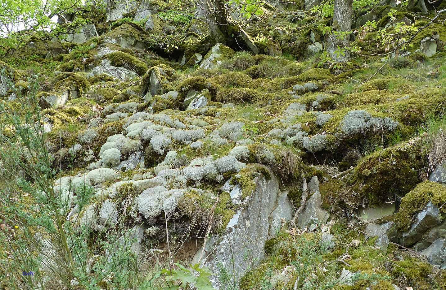 Nationalpark Kellerwald - Edersee