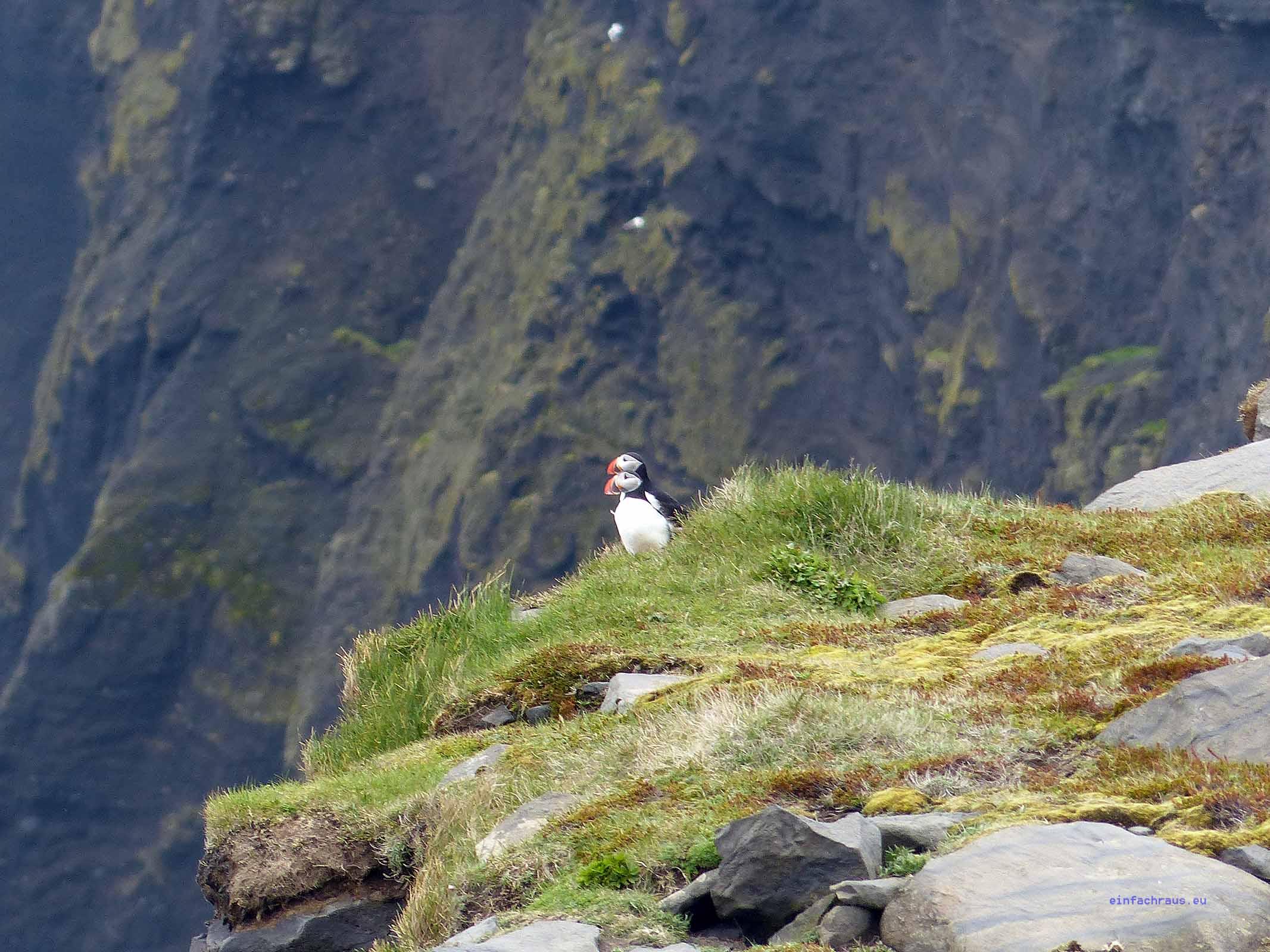 Auf Island wird der kleine Kerl mit seinem farbenfrohen Schnabel nur Lundi genann