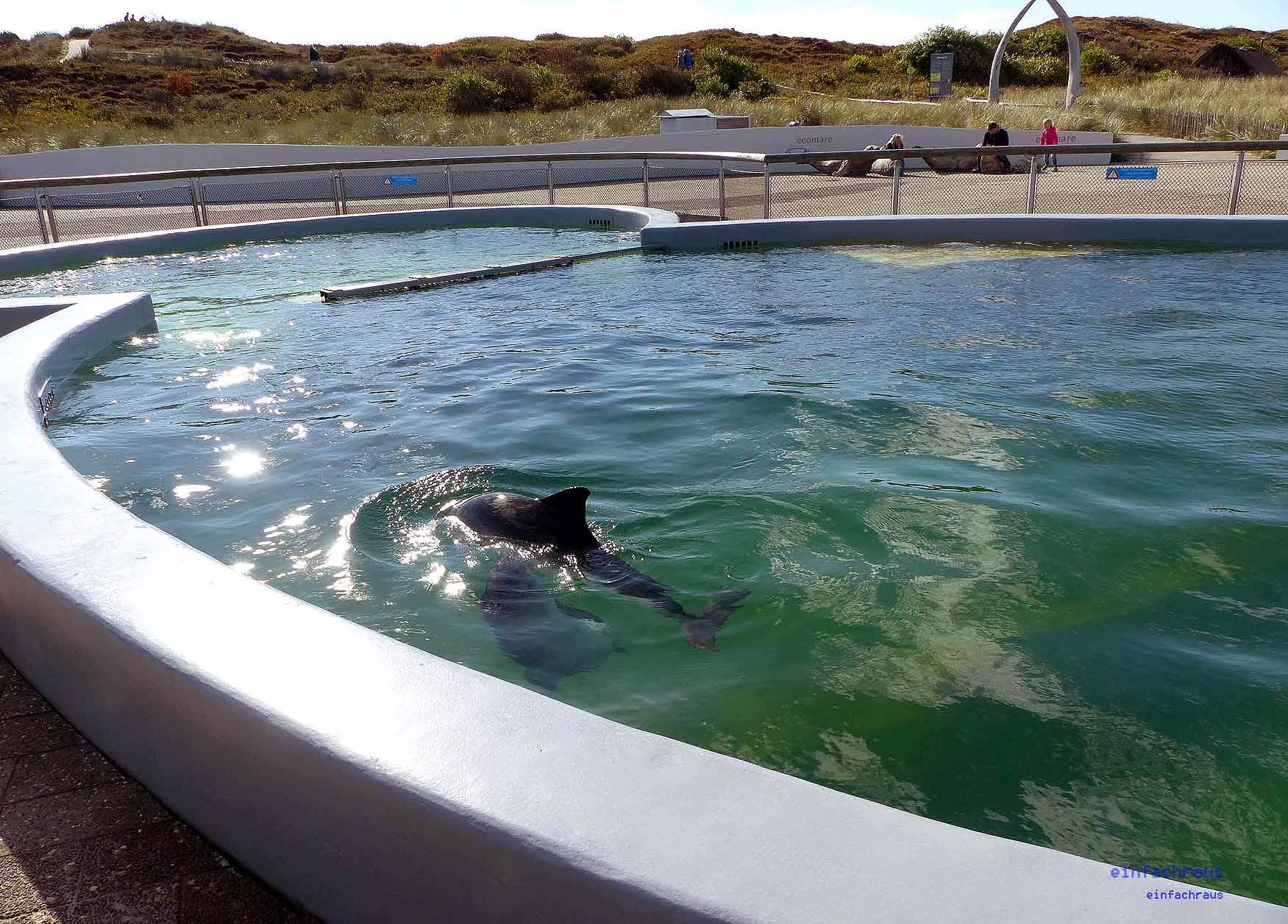 Großzügige Becken für die Seehunde im Ecomare, Foto: Weirauch