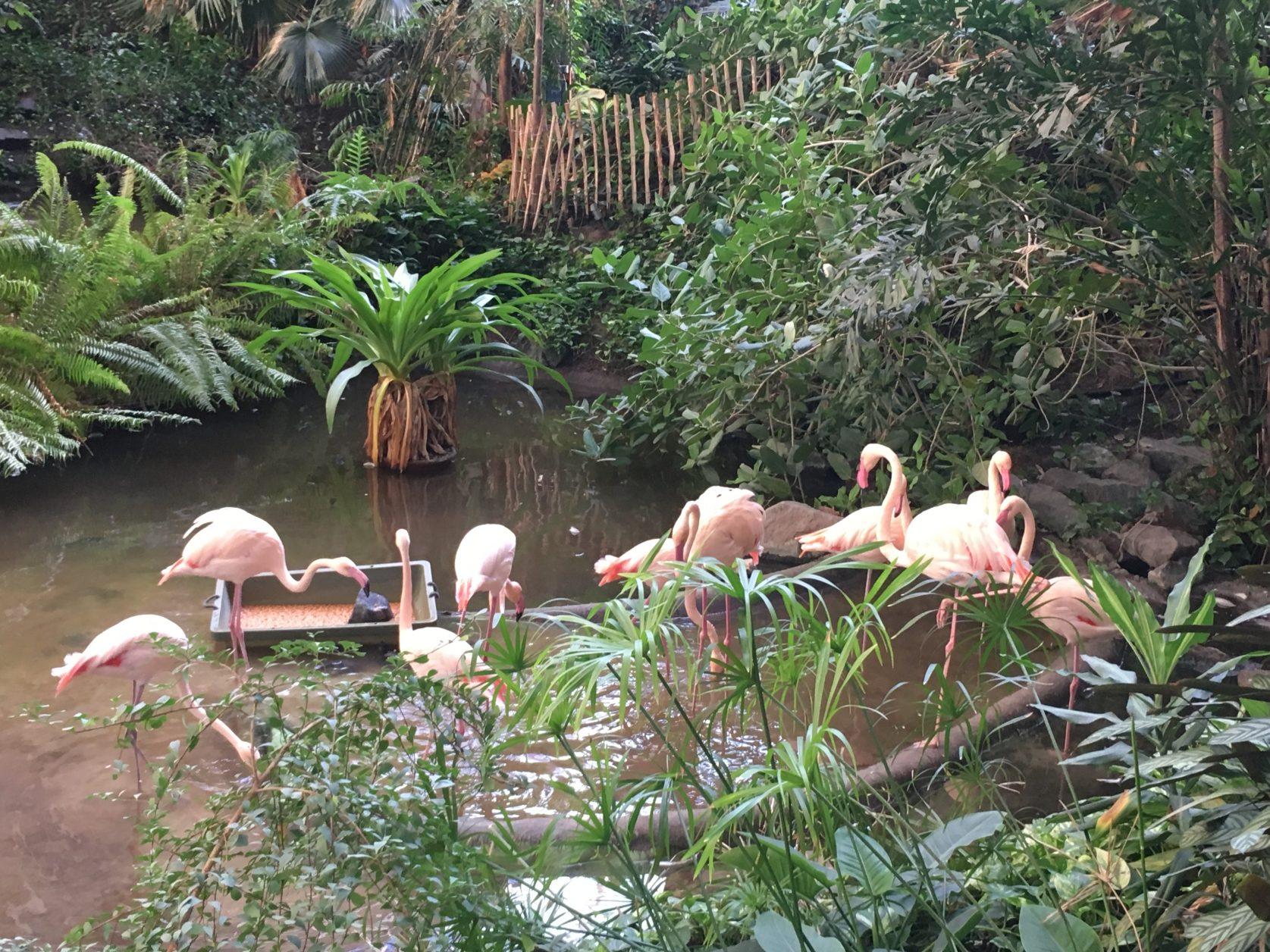Den Flamingos geht es schein ganz gut bei 25 Grad, Foto: D.Weirauch