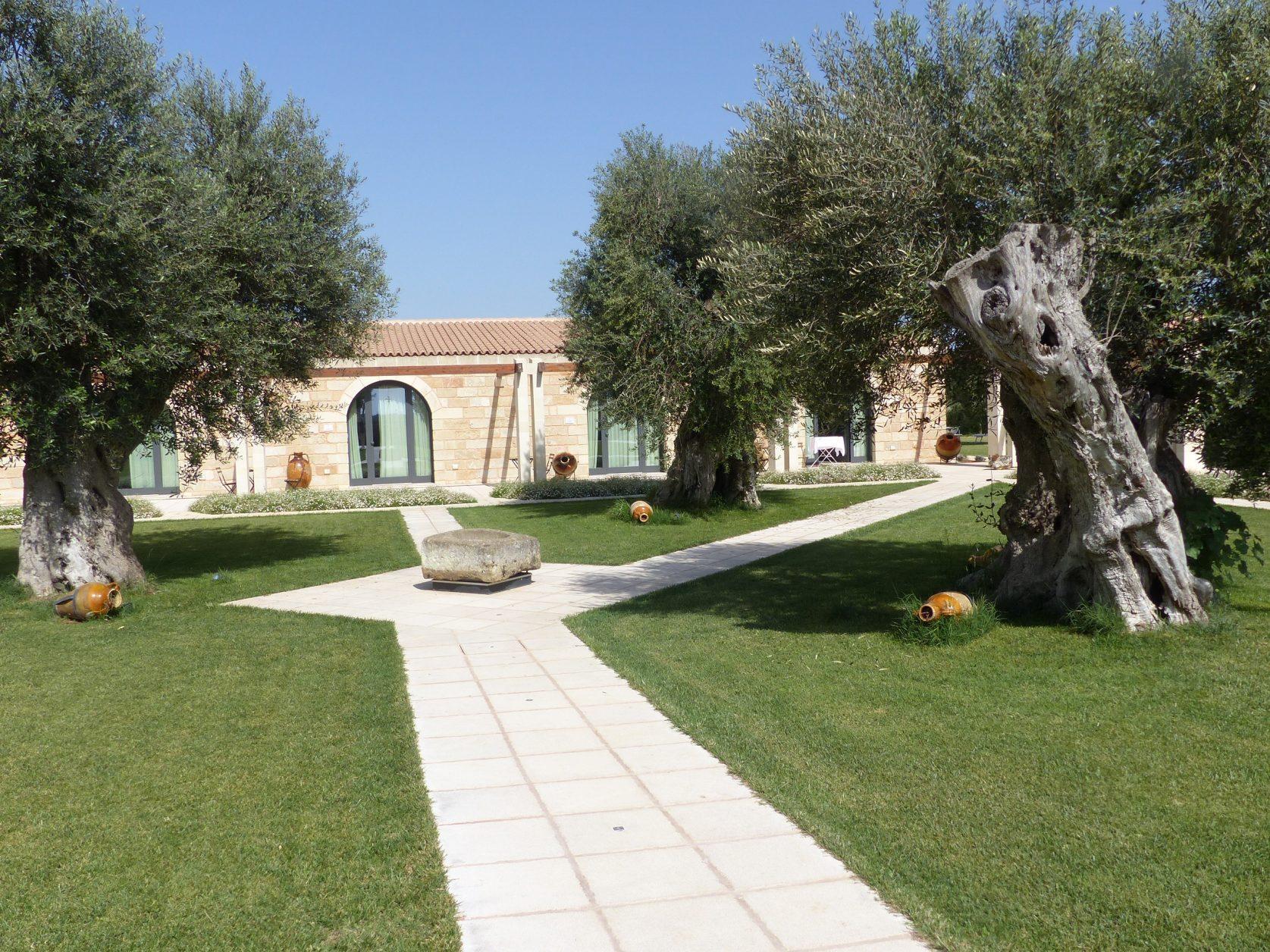 Uralte Olivenbäume im Garten der Masseria Stali Foto: Weirauch