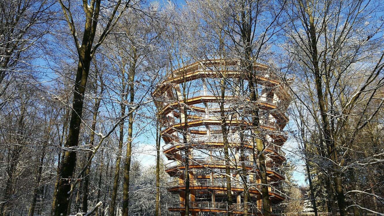 Baumkronenpfad im Steigerwald Foto: Bayerische Staatsforsten (ReComPR GmbH)
