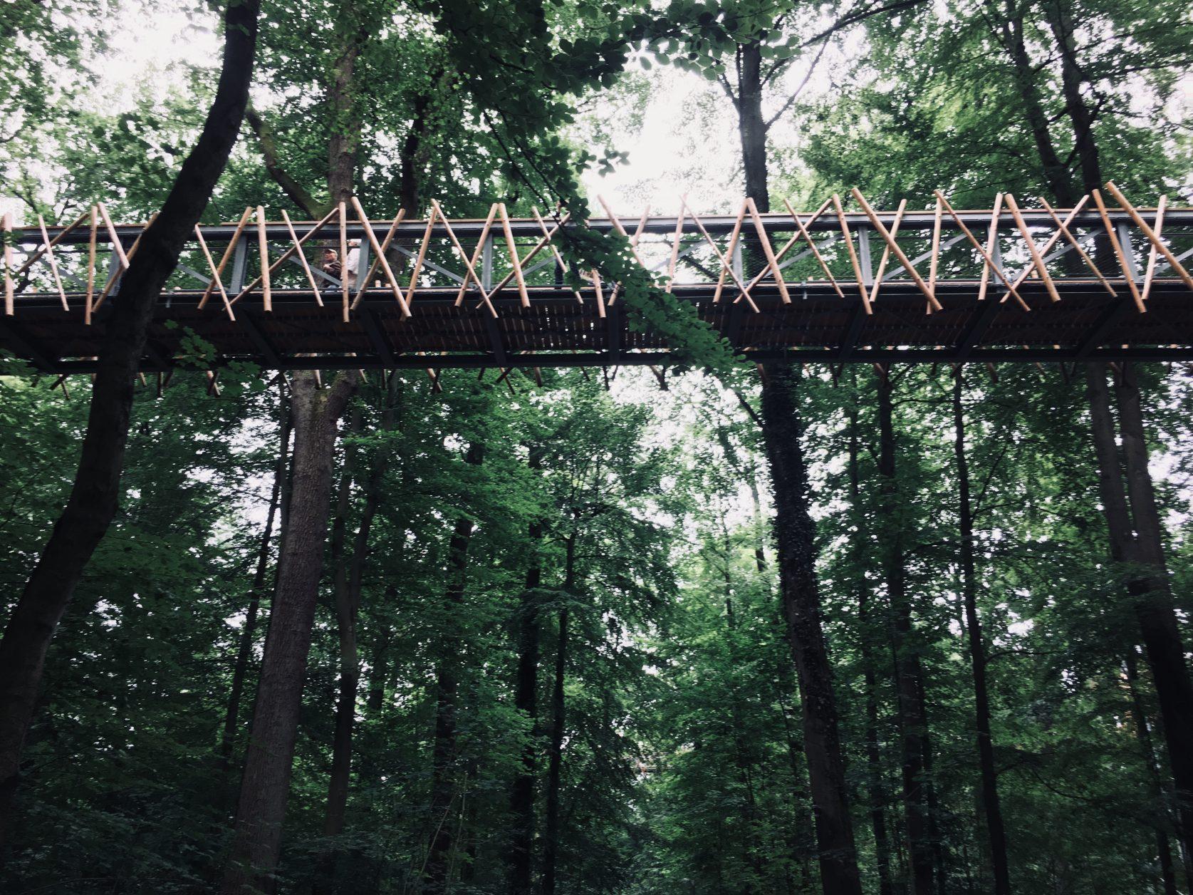 Auf dem Baumkronenpfad von Bad Iburg Foto: Weirauch