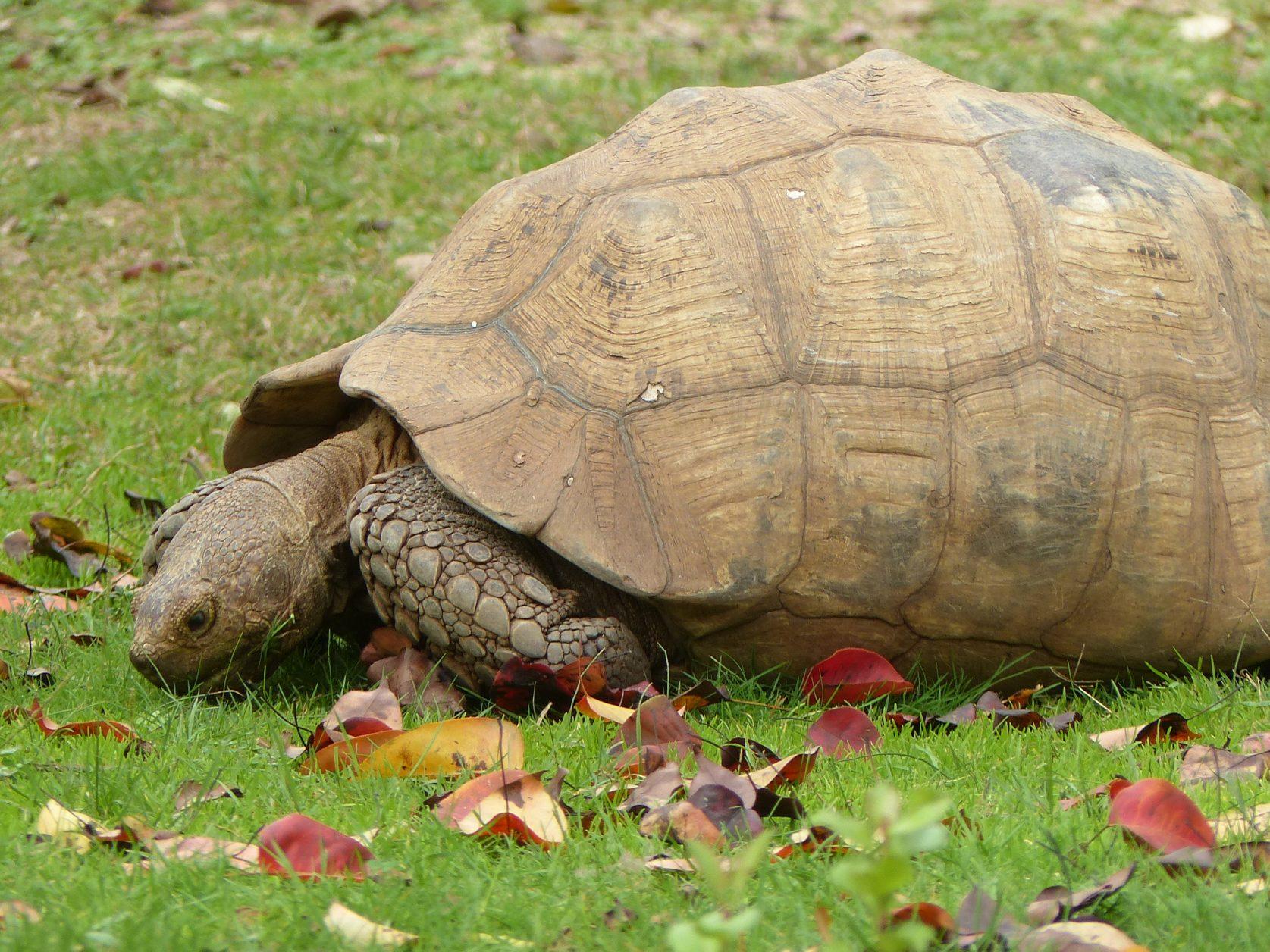 Eine halbe Stunde entfernt von Ajaccio: der Schildkrötenpark Foto: Weirauch