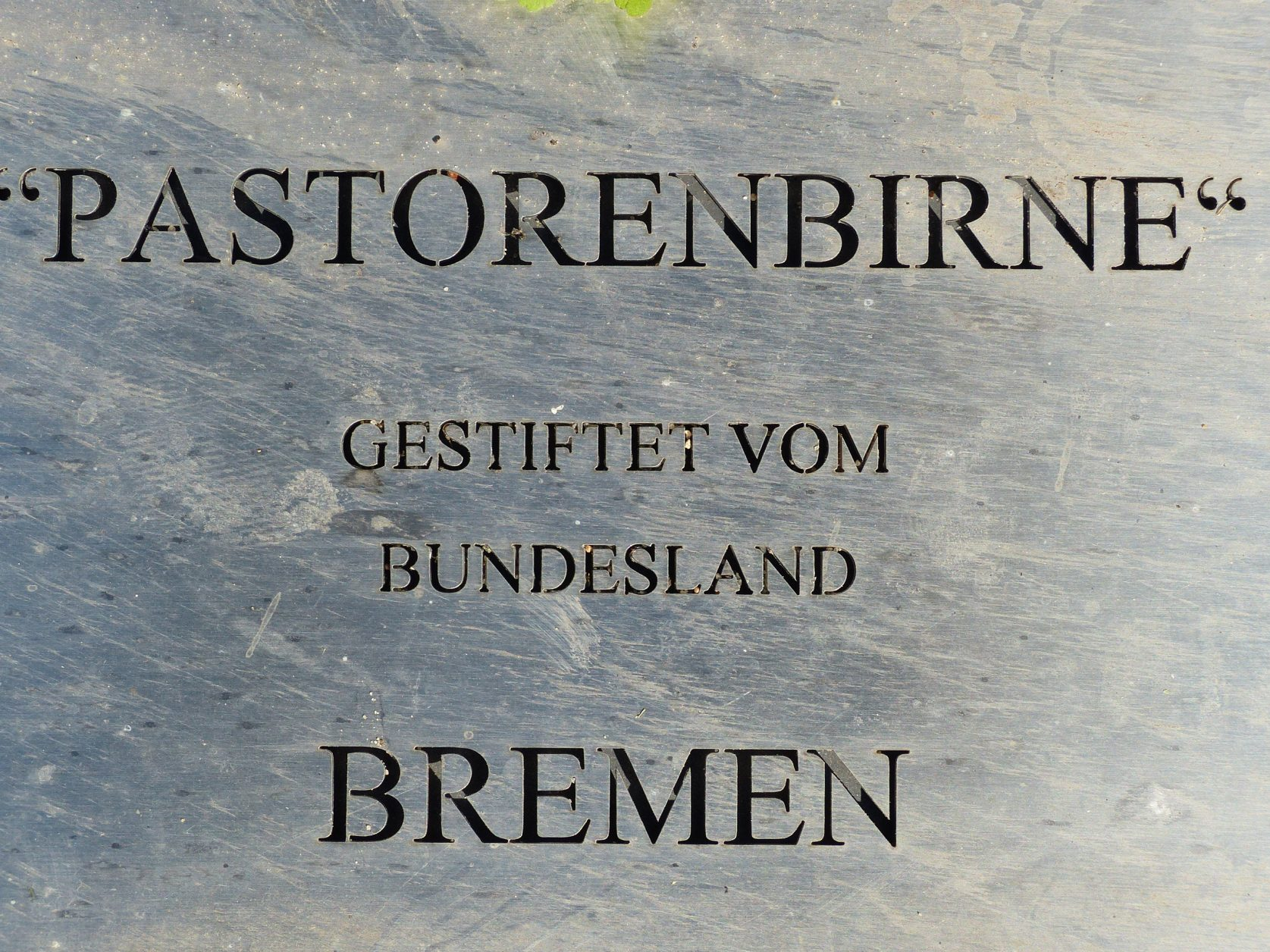 Birnen Ribbeck
