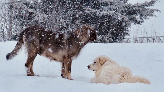 Schnee beruhigt