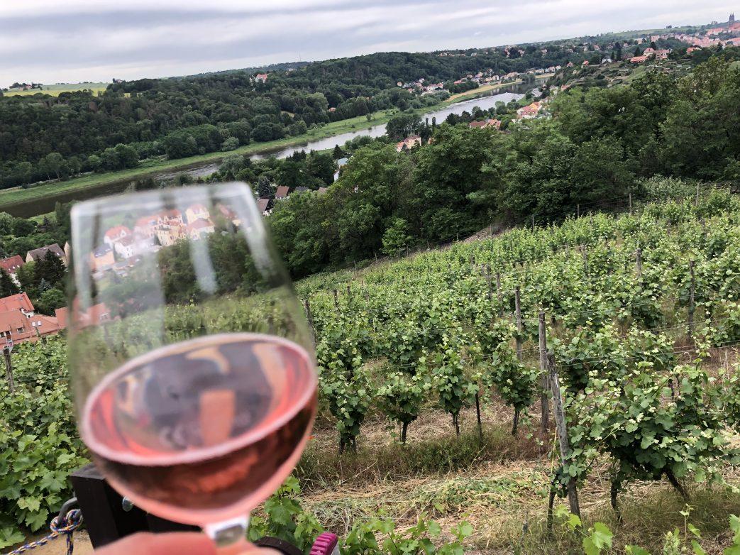 Blick vom Weinberg des Weingut Schuh auf die Elbe