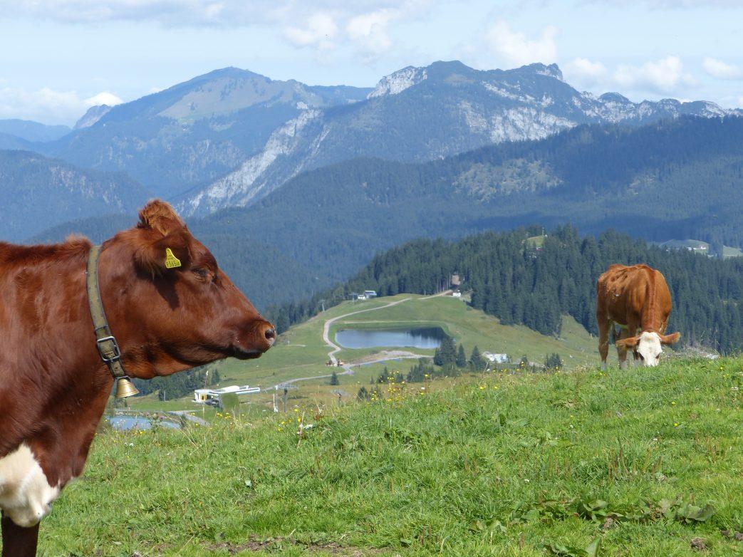 Waidring - Tirol (43)