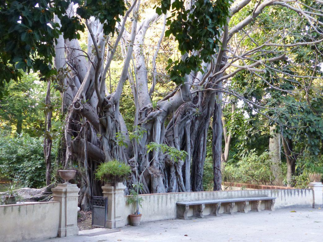 Sizilien Palermo Botanischer Garten