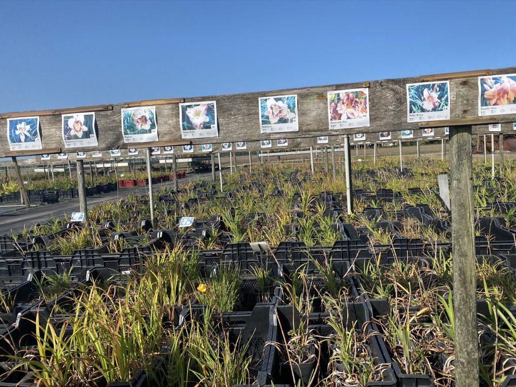 Gärtnereirutten