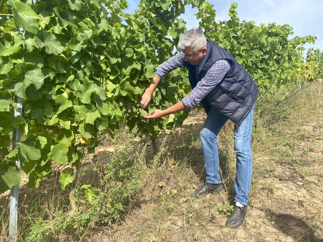 Marek Kojder begutachtet den Wein Polen