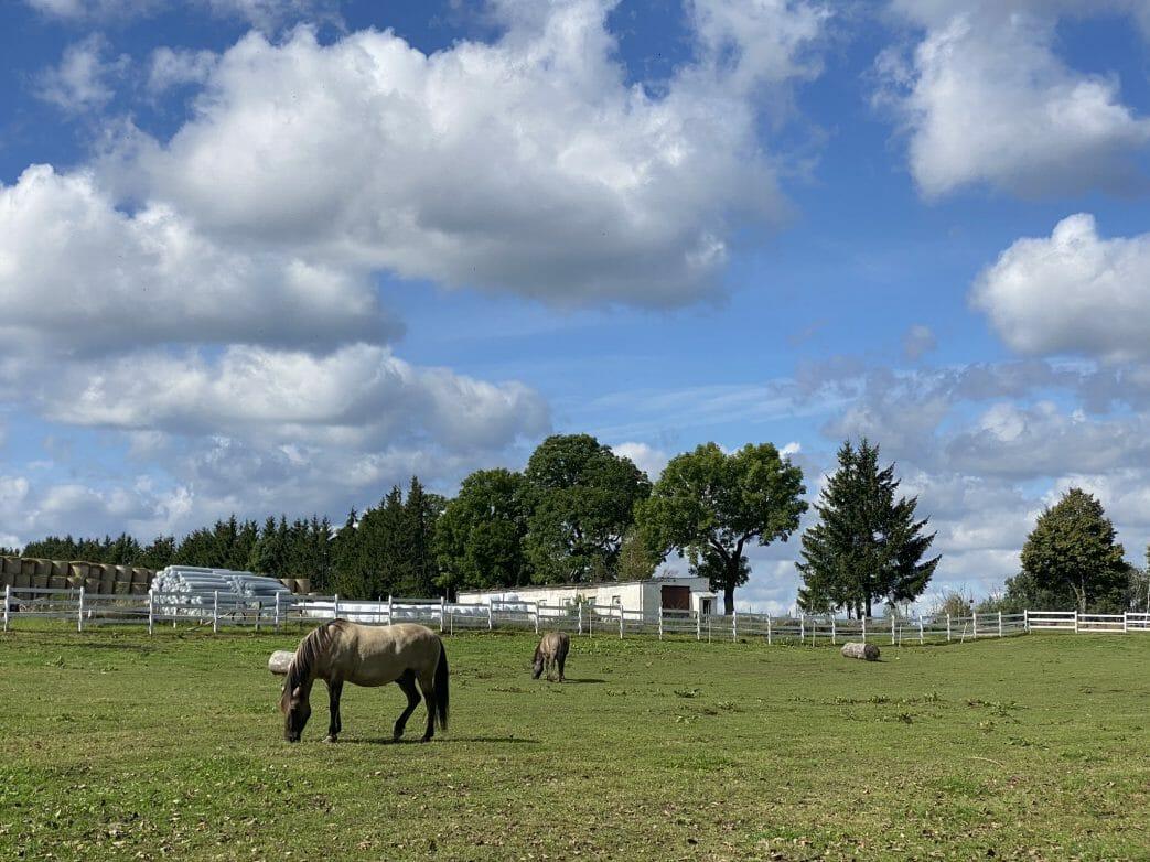 Pferde Masuren