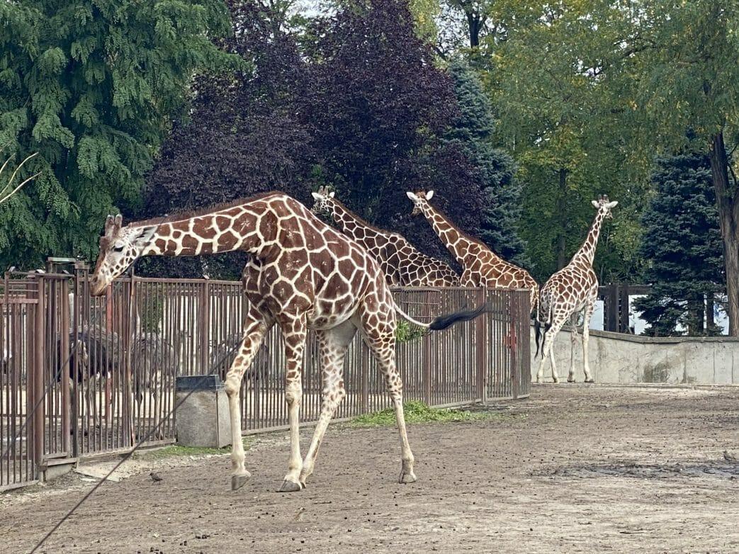 Breslau.Zoo (2)