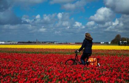 Mit dem Rad durch die Blumenfelder_Foto Cris Toala Olivares
